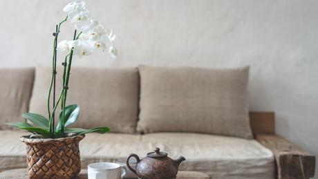 Plantas para energizar e decorar a casa