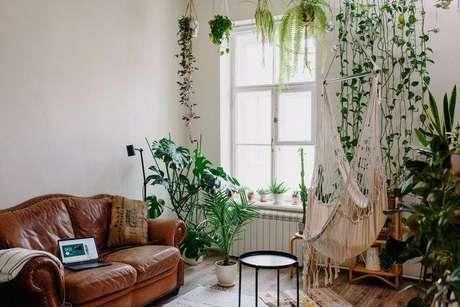 Saiba quais espécies de plantas evitar ter em casa -
