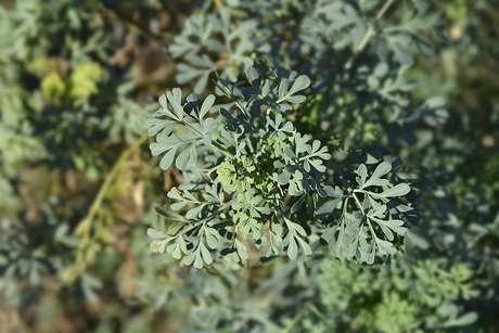 plantas e ervas