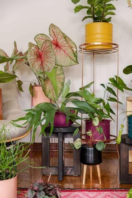 29. Casa decorada com plantas e caladium rosa – Foto Selvva