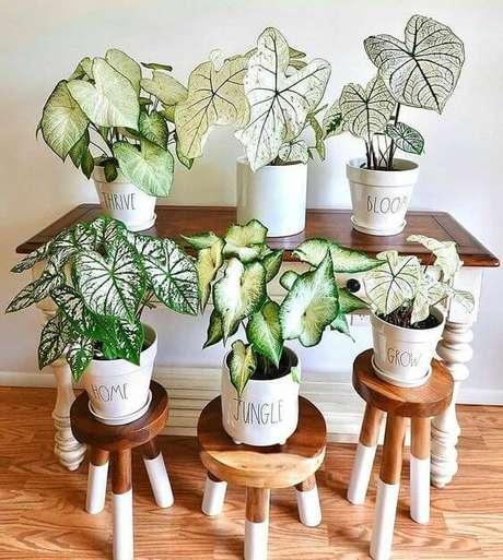 10. Casa com plantas caladium de diferentes tamanhos – Foto Pinterest