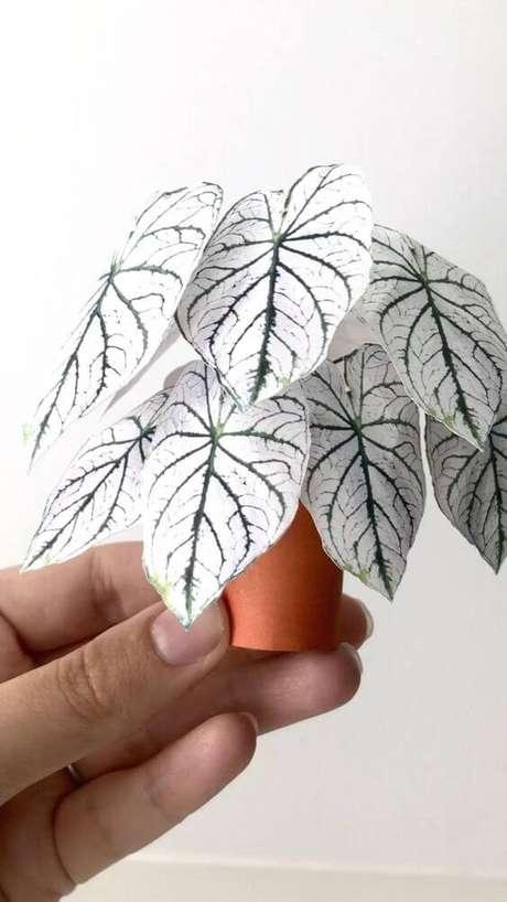 20. Mini Caladium branco pequeno Foto Pinterest