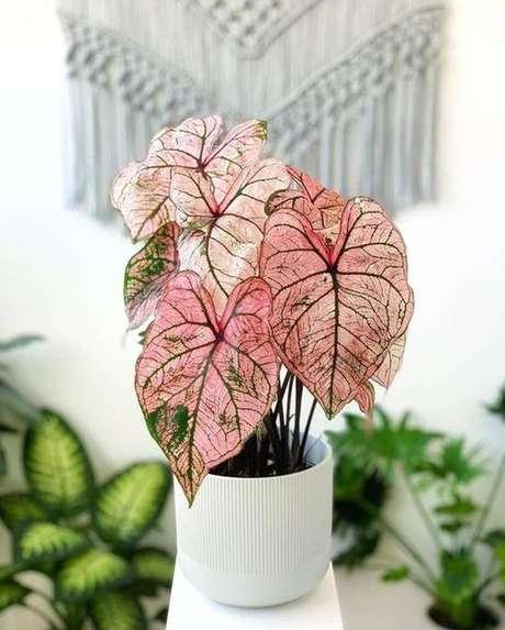 44. Vaso branco com caladium rosa – Foto Au Feminin