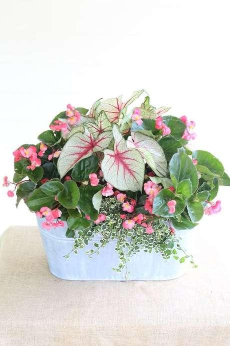 42. Vaso de flores com caladium – Foto Pinterest