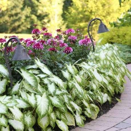 26. Jardim com caladium e flores roxas – Foto Longfield Gardens