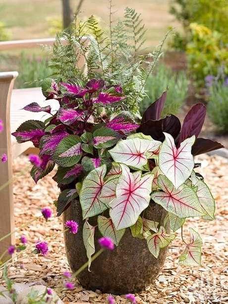 23. Jardim com caladium rosa e verde – Foto Better Homes and Gardens