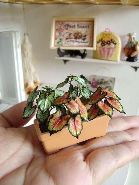 40. Vaso mini Caladium – Foto Deviant Art