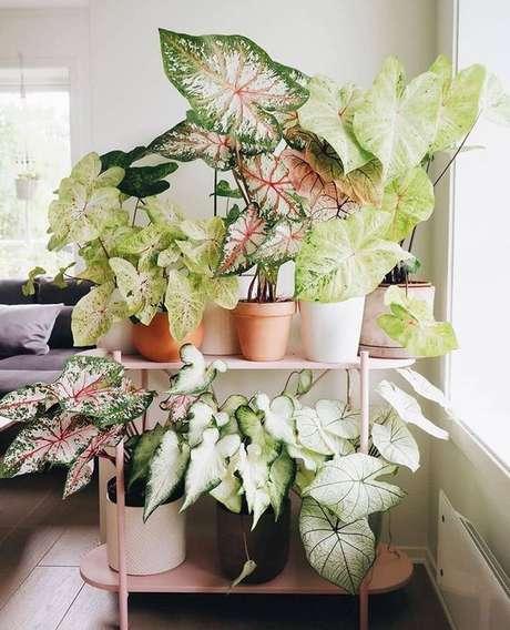 6. Plantas na decoração com caladium – Foto Pinterest