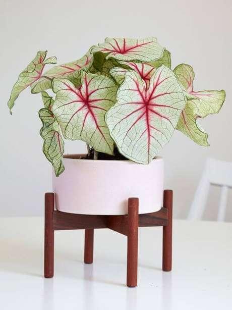 37. Caladium no vaso branco – Foto Flora Grubb