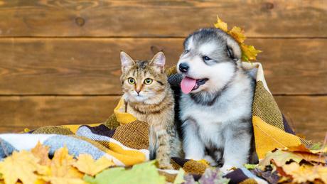 Cuidados com os pets no outono