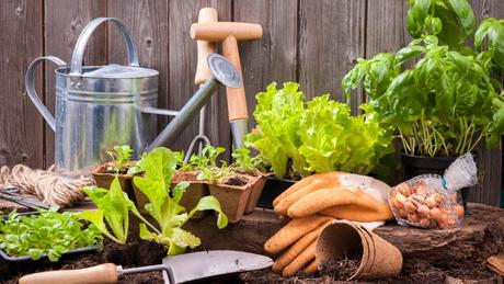 Cuide bem da sua horta em casa