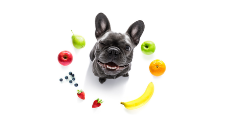 Frutas ideais para o seu pet