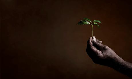 Illycaffè recebe certificação por desempenho sustentável