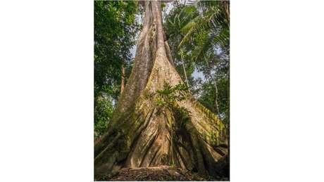 Preservação da Amazônia é considerada crucial para atenuar as mudanças climáticas, pois a floresta em pé armazena grande quantidade de carbono