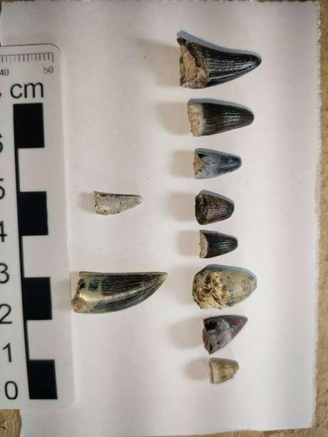 Entre os achados dos pesquisadores estão dentes de dinossauros carnívoros
