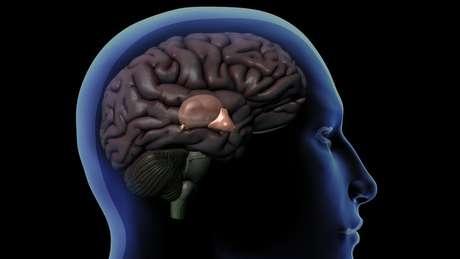 Desenho de um cérebro dentro do crânio humano mostrando a glândula pineal atrás do hipotálamo