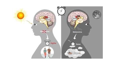 A regulação do sono em humanos. Esquerda: a luz é capturada pela retina. O sinal de luz é transmitido pelo cérebro e impede a liberação de melatonina pela epífise. À direita: à noite, a ausência de luz estimula a produção do hormônio do sono. (Gráfico feito via Mindthegraph.com)