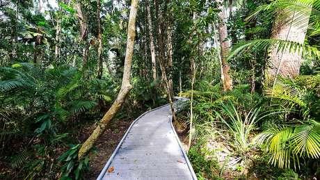 Várias organizações oferecem tours para avistar planadores nas florestas