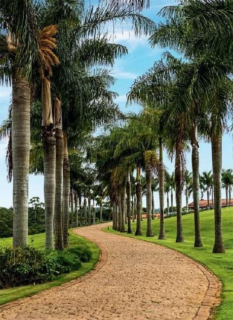 84. Entrada triunfal com palmeiras para casa de fazenda. Fonte: Pinterest
