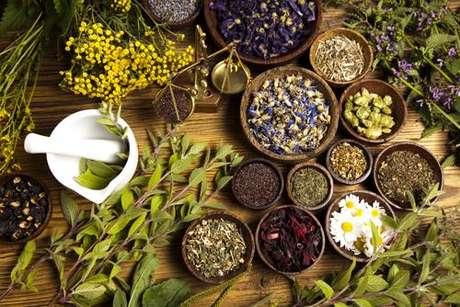 Saiba quais são as melhores ervas para o seu signo sol, ascendente e lua - Shutterstock