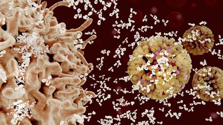 Na ilustração, linfócitos B (à esquerda) liberam anticorpos (pequenas estruturas brancas) nos vírus (à direita)