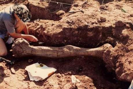 As escavações demonstraram que ogigante jurássico media cerca de 20 metros de comprimento.