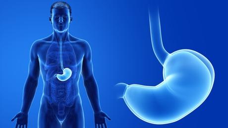 O câncer de Covas se desenvolveu na junção entre esôfago e estômago, no sistema digestivo. No detalhe à direita, é possível observar onde os dois órgãos (esôfago na parte superior e estômago na porção inferior) se unem