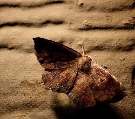 As mariposa são consideradas mensageiras que transitam entre o mundo dos vivos e dos mortos./ Shutterstock.Caption