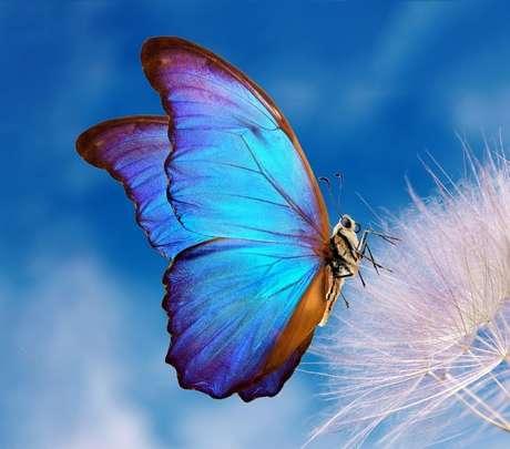 A borboleta pode representar beleza e efemeridade./ Shutterstock.