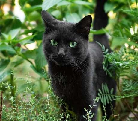 Os gatos são conhecidos por fazerem limpezas energéticas no lar./ Shutterstock.