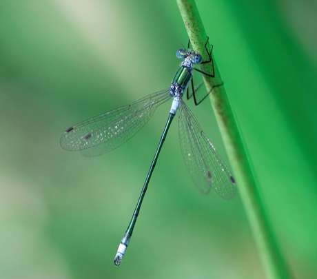 A libélula simboliza o poder de adaptação às circunstâncias./ Shutterstock.
