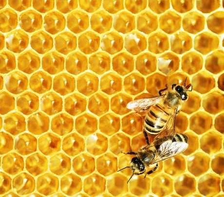 A abelha pode simbolizar fertilidade, comunicação, ordem, alma e justiça./ Shutterstock.