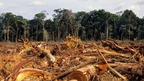 Desmatamento na Amazônia atingiu em 2020 o maior índice dos últimos 12 anos