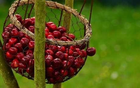 Benefícios das frutas vermelhas: descubra 5 deles