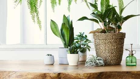 Existe uma planta específica para cada um dos doze signos