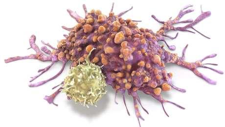 Existem diferentes hipóteses sobre a evolução do câncer