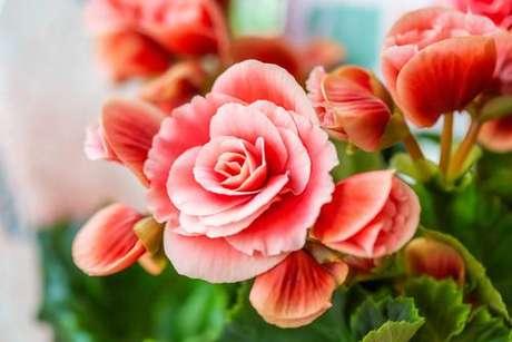 Saiba quais serão as energias da semana através da energia das flores - Shutterstock