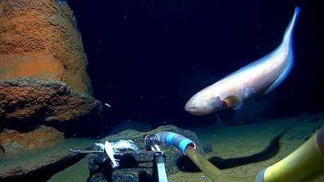 Os cientistas encontraram uma grande quantidade de vida nas profundezas do oceano