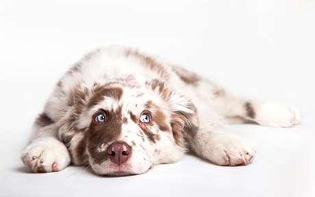 Com quem seu pet de Lua em Touro harmoniza - Shutterstock