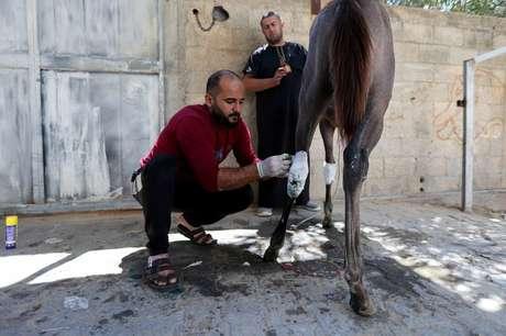 Homem trata cavalo do palestino Omar Shahin, que foi ferido durante o combate entre Israel e Palestina, em Gaza 24/05/2021 REUTERS/Ibraheem Abu Mustafa