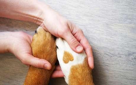 Proteja o seu melhor amigo com essas orações iluminadas - Shutterstock