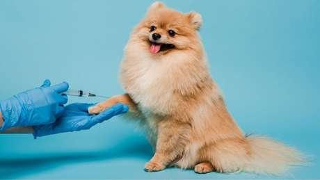 Você sabe quais são as vacinas essenciais para o seu cão?