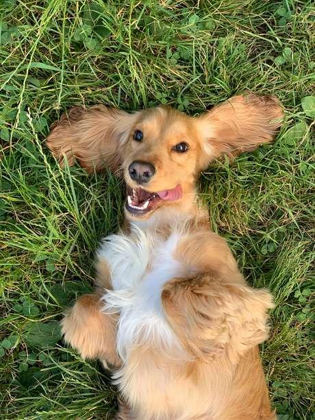 Confira algumas dicas para aliviar o stress dos cães
