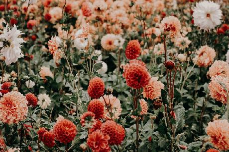 Florais para sensualidade