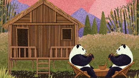 O bambu é a planta de crescimento mais rápido do mundo