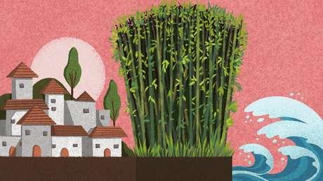 O cultivo de bambu pode prevenir a erosão e diminuir o risco de inundações