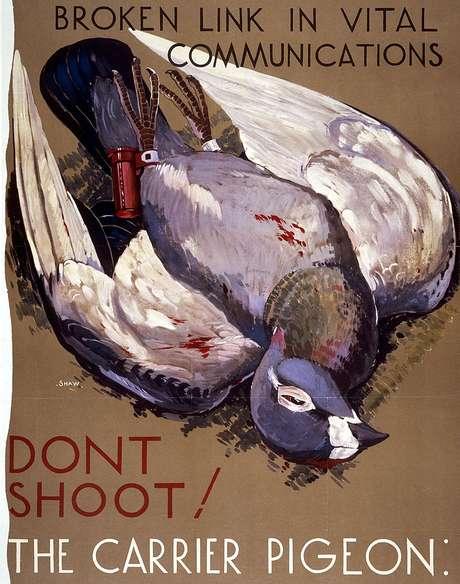 Cartazes como este pediam às pessoas que não matassem os pombos, pois poderiam interferir em comunicações vitais