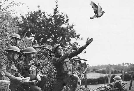 Voluntários locais de defesa (LDV, na sigla em inglês) treinando pombos-correio no noroeste da Inglaterra em 1940