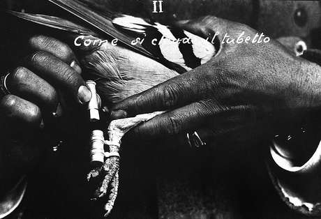 Pombos-correio já haviam sido usados em guerras antes — como nesta foto de 1915, na Itália, que mostra como manipular o tubo que contém a mensagem