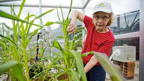 Dolores Piperno trabalha no Museu de História Natural do Smithsonian em Washington DC e no Tropical Research Institute no Panamá
